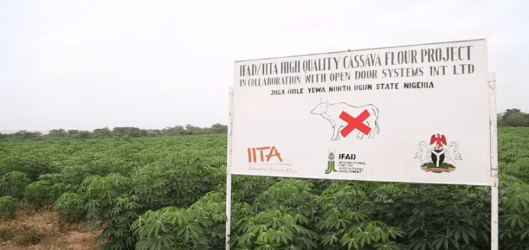 Open Door System and IITA Partnership