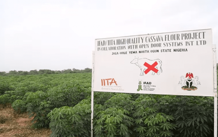 open door partners with IITA